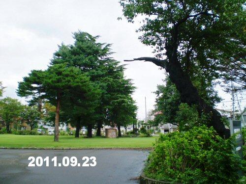 03 500 20110923 勤研センター前の老桜