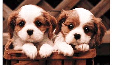 02 PuppiesBeforeLattice