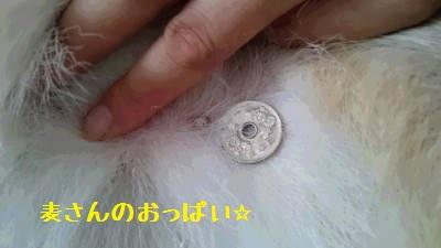 50円玉の穴くらい。