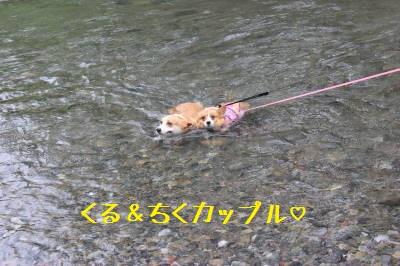 仲良く泳ぐくるちく