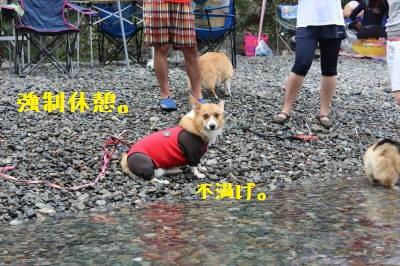 泳ぎたいでしゅ!