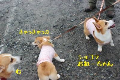 美犬姉妹♪