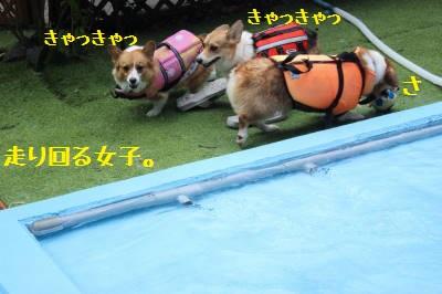 プールに入って下さい。