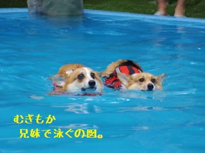 むぎもかで泳ぐぅ