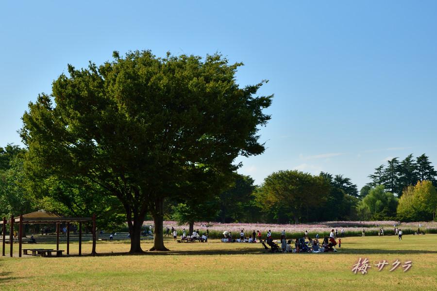 昭和記念公園3変更済