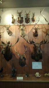 滋賀サファリ博物館