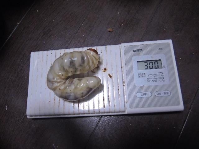 DSCN0700[1]