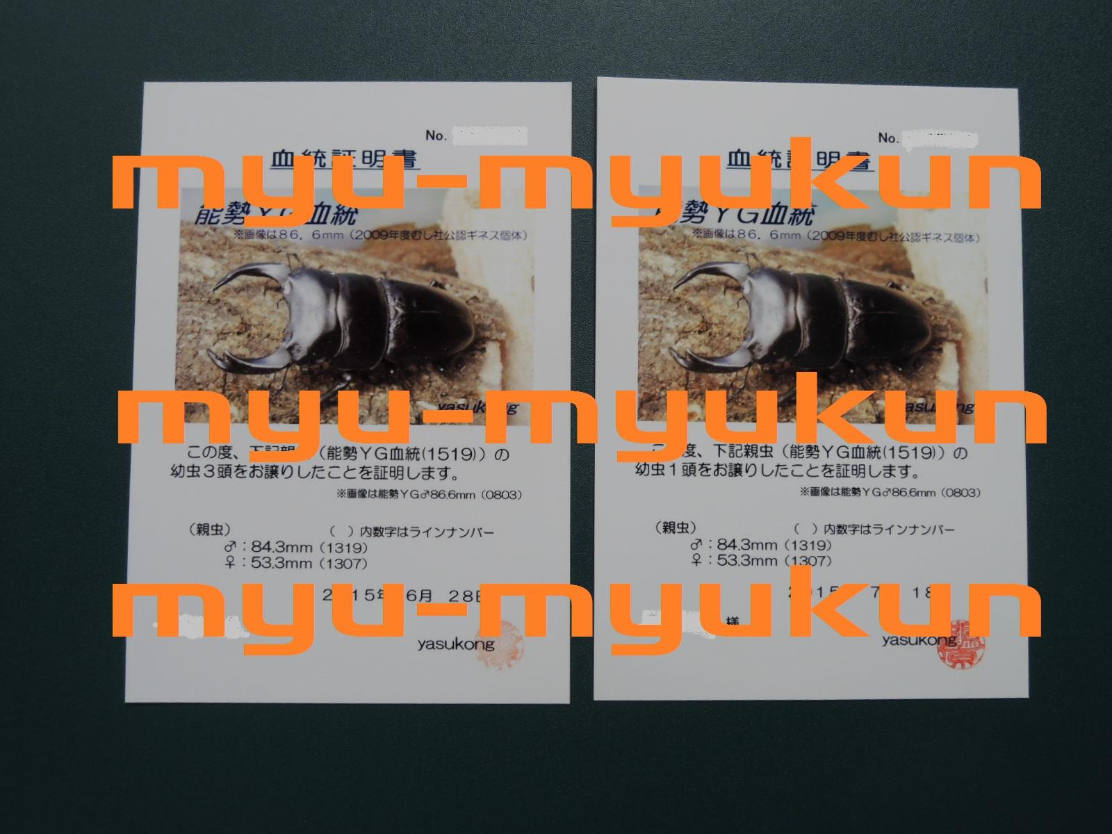 ブログ用 証明証 yasukong氏 幼虫2