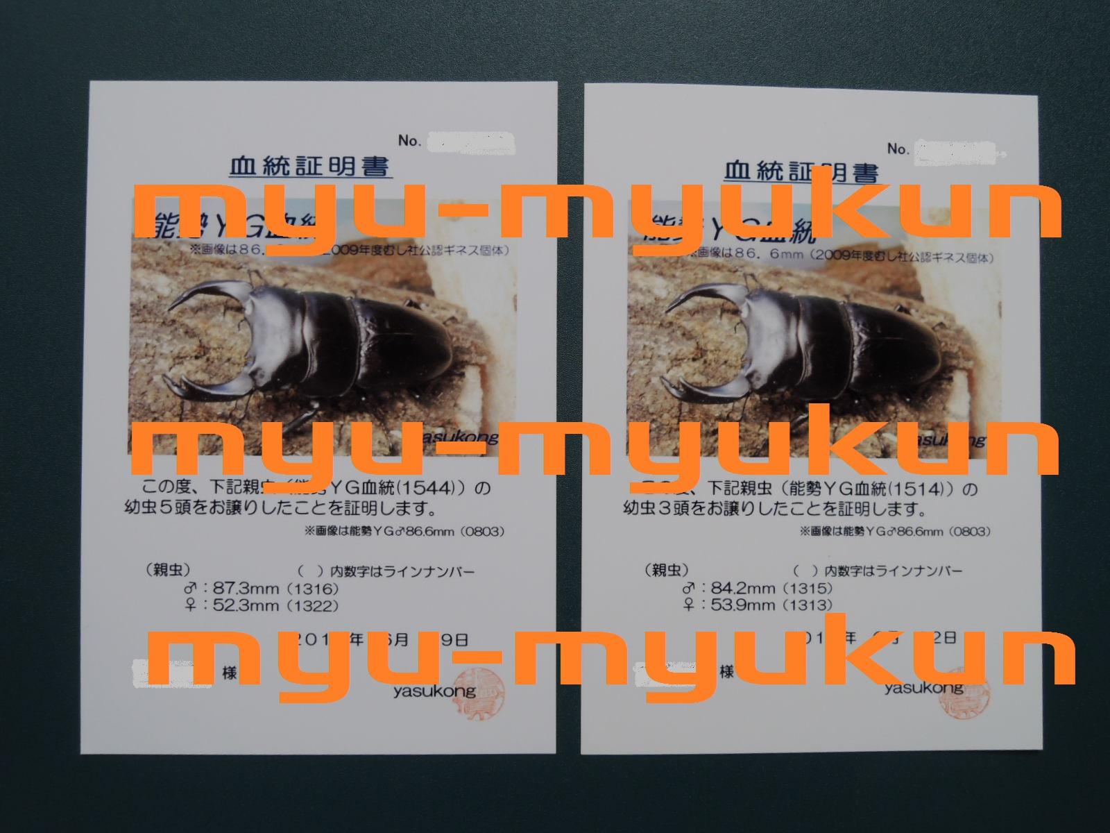 ブログ用 証明証 yasukong氏 幼虫1