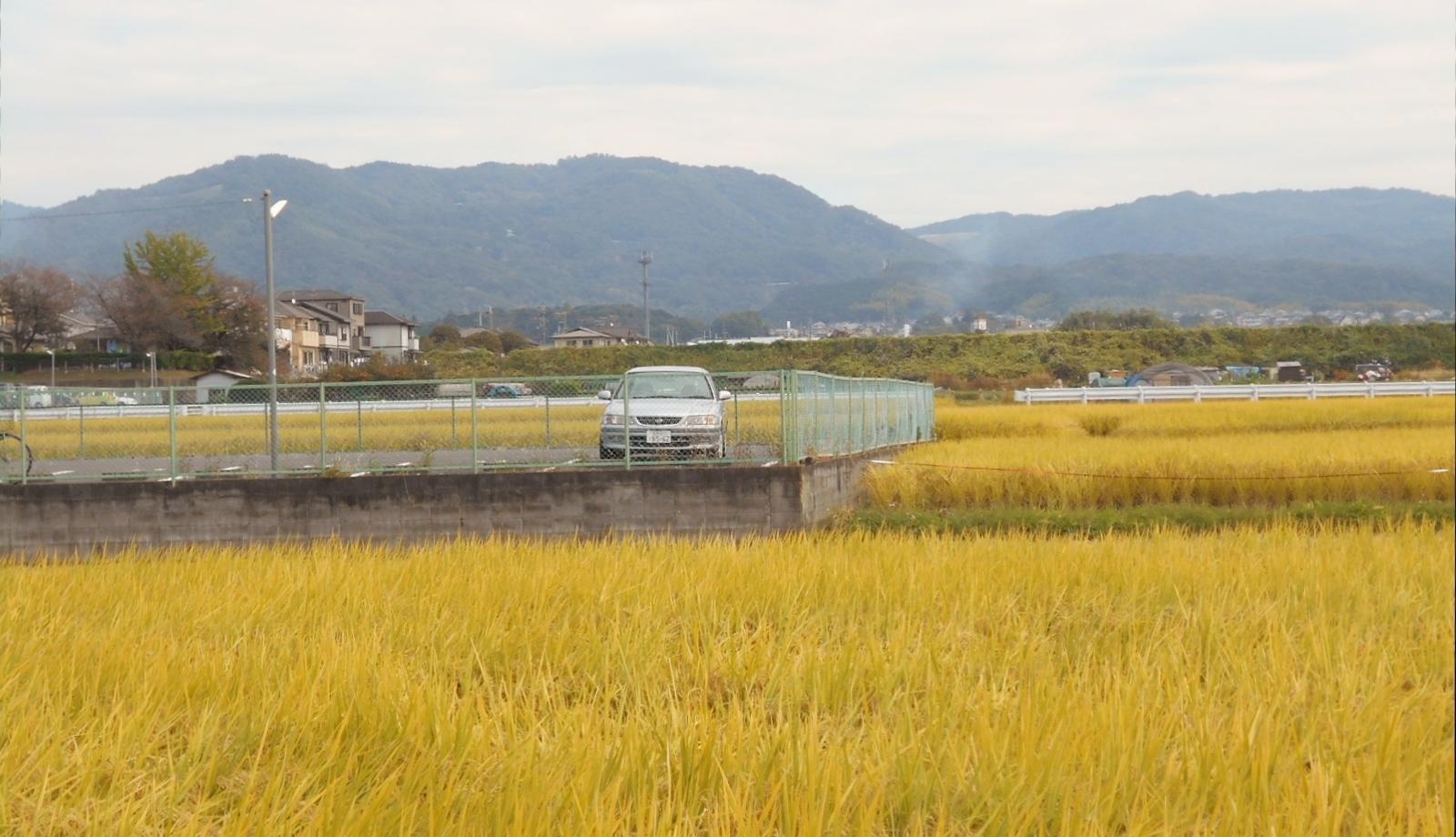 黄金色と山