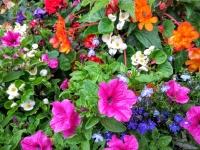 flowersaug15