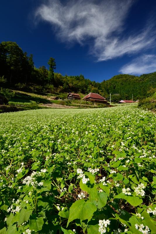 「蕎麦の花咲く山村1」  (香川県まんのう町)