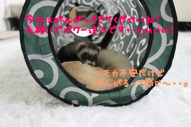 B2XR4_rDRYnOk2R1444657428_1444657591.jpg