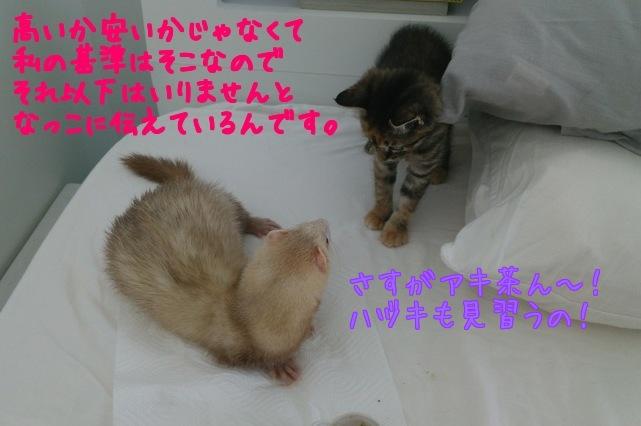 MRCjZO0Yv8PzBSL1441367655_1441367818.jpg