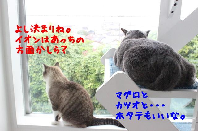 YKRrrO7cKEXoP_g1441593455_1441593602.jpg