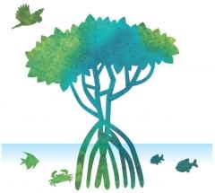 mangroveのイラスト