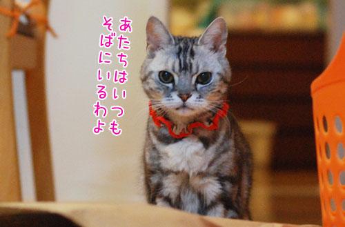 DSC_8369_2.jpg