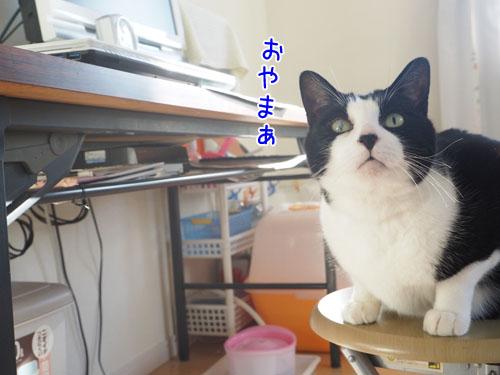 PA070011_2.jpg