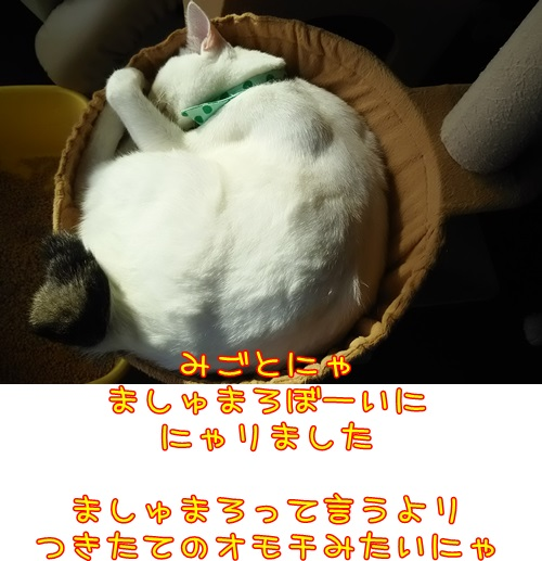 DSC_0238_20150930215637dd4.jpg