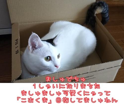DSC_0242_20151007135712b5e.jpg