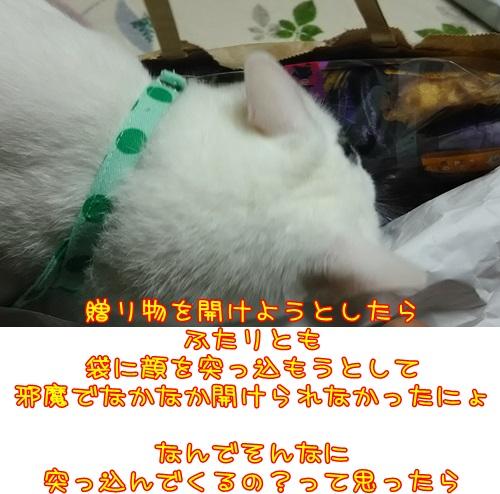 DSC_0248_20151007135714f91.jpg