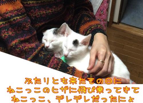 IMG_1480_201509302157144d2.jpg