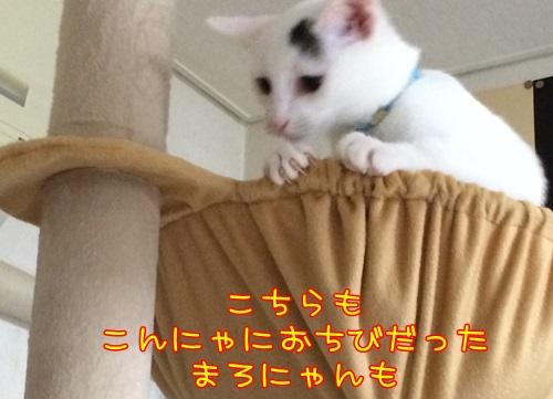 IMG_1764_201509302159083e3.jpg