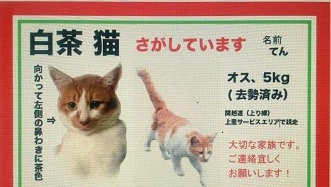 3迷い猫てんてんちゃん