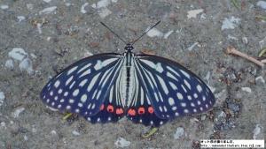 buttherfly.jpg