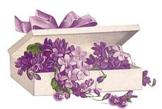 violets5.jpg