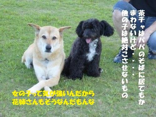 P1000352_convert_20150824095412.jpg