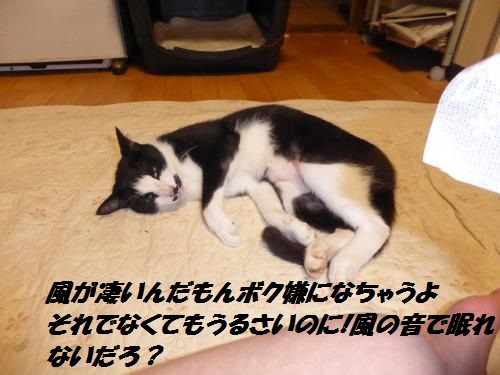 P1000355_convert_20150826133016.jpg