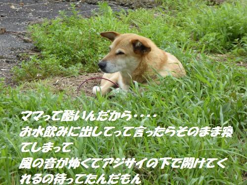 P1000359_convert_20150826133138.jpg