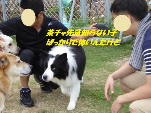 P1000403_convert_20150831133233.jpg