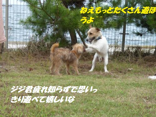 P1000412_convert_20150831133319.jpg
