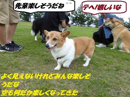 P1000416_convert_20150831133345.jpg
