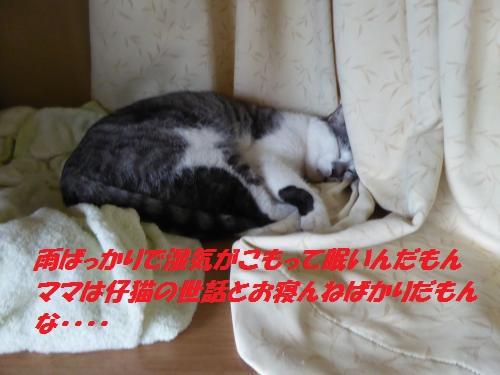 P1000417_convert_20150911155048.jpg