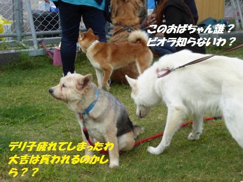 P1000432_convert_20150906104016.jpg