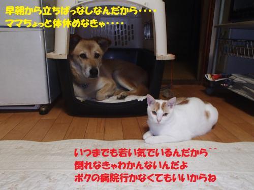 P8170020_convert_20150821135046.jpg