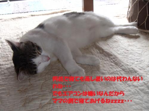 P8190027_convert_20150821135147.jpg