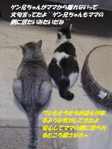 P8210036_convert_20150825101323.jpg