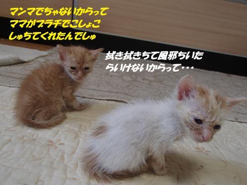 P9030085_convert_20150903140121.jpg