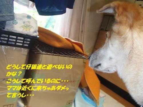 P9080096_convert_20150911155227.jpg