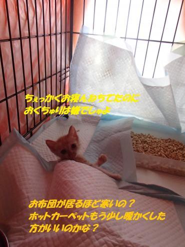 PA030179_convert_20151007130118.jpg