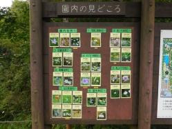 湿生花園(3)