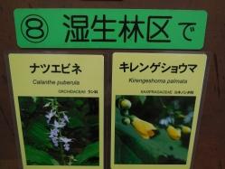 湿生花園(4)