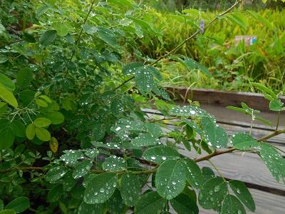 湿生花園(5)