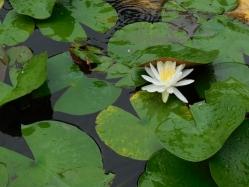湿生花園(6)