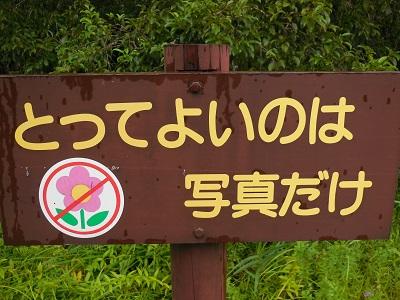 湿生花園(14)