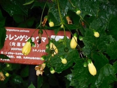 湿生花園(29)